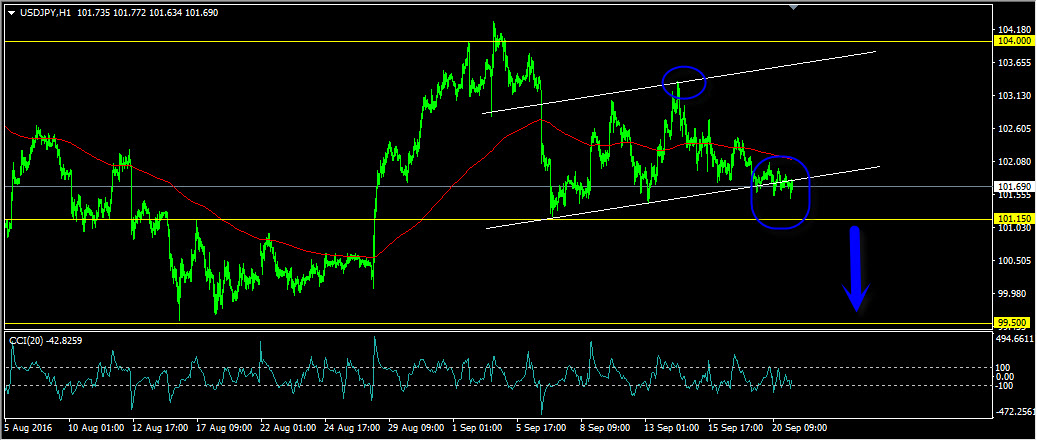 Forex trading daily forecast